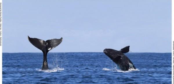 Stenzo Baumwoll Jersey Panel Whale Watching Digitaldruck